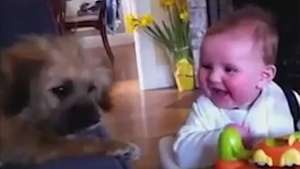 Compilado mostra que bebês e filhotes formam um ótimo time Video: