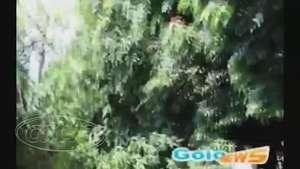 Homem fica três horas pendurado em árvore em Goioerê, no Paraná Video: