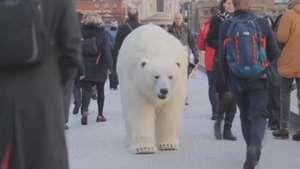 Urso polar causa espanto ao passear por Londres Video: