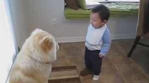 Linguagem da fofura: bebê tenta 'conversar' com cachorro Video:
