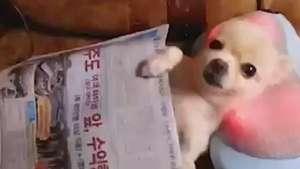 Cãozinho aprova travesseiro que faz massagem Video: