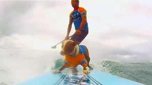 Los perros también surfean en el festival Noosa de Australia Video: