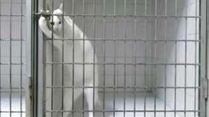 """""""Prison Break Gatuno"""": mira lo que este felino es capaz de hacer Video:"""