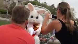 Al tipo disfrazado de conejo se le cae un bebé durante la foto Video: