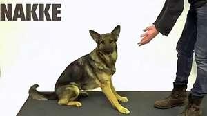 Reacción de perros cuando un mago hace desaparecer una galleta Video: