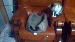 Insólito: un gato intenta atrapar a otro gato con una caña de pescar Video: