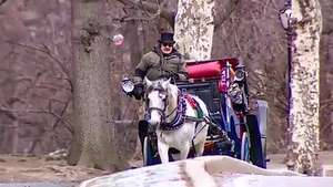 Peligran los tradicionales carruajes del Central Park en NY Video: