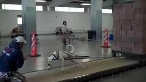 Increíble: Perro gimnasta Video:
