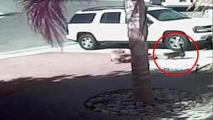 Una gata salva a un niño del ataque de un perro Video: