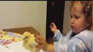 Tierna niña pelea con su pollito porque no la deja hacer la tarea Video: