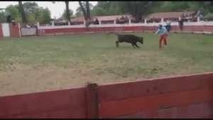 Por esta razón es peligroso jugar con toros Video: