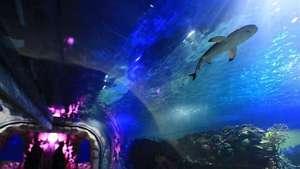 Abre en México uno de los acuarios más completos del mundo Video: