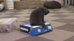 Gato abusa de la confianza de su amigo y lo encierra en una caja Video: