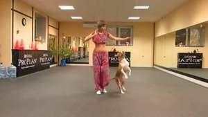 ¡Se pasó! Pitbull se luce bailando la danza del vientre Video: