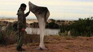 Exhiben esculturas gigantes hechas con huesos de ballena Video: