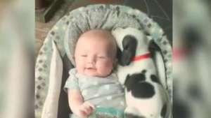 Así es la ternura máxima entre un bebé y un pitbull cachorro Video: