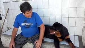 La particular manera de un perro Rottweiler para pedir cosquillas Video: