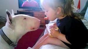 Niña alimenta a su perro de una manera muy peculiar Video:
