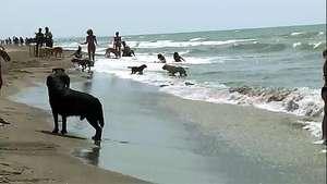 Una playa para perros en Italia conquista a miles de mascotas Video: