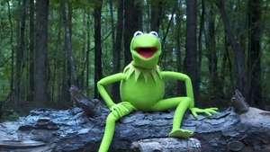 La rana René también se sumo al reto del 'Ice Bucket Challenge' Video: