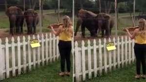 Elefantes bailan seducidos al ritmo del violín Video: