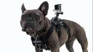 ¿Cómo ven el mundo los perros? Video: