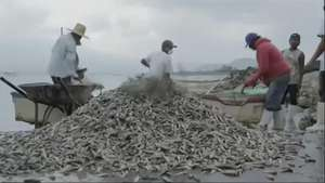 Thousands of Fish Dead in Mexico Lake Video: