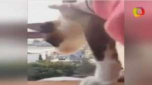 Una adolescente lanza un gatito por la ventana del piso 14 Video: