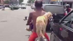 Perro se traslada en moto y se convierte en hit en la web Video: