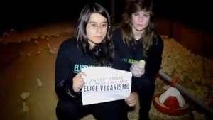Activistas de EligeVeganismo rescatan pollos de criadero Video: