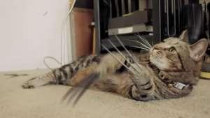 Así imaginar los problemas de un gato con garras de Wolverine Video: