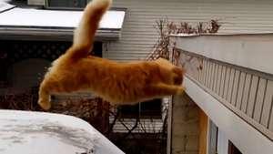 Gato con sobrepeso sufre aparatosa caída Video: