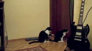 Un gato pidiendo perdón a su compañero se vuelve furor en la web Video: