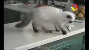 Mira al gato