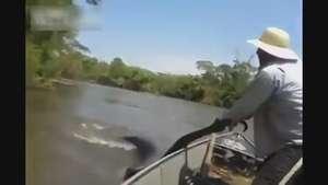 Hallan una gigantesca anaconda en Brasil Video: