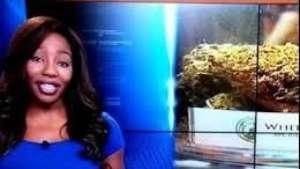 ¡Escándalo! Renuncia en vivo por apoyar la marihuana Video: