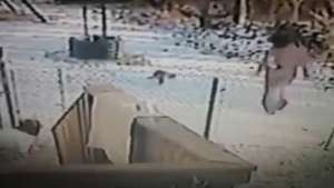 Ella se la busco! Gato se toma venganza tras ser desalojado Video: