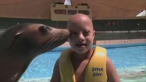 Cuba: Delfines y leones marinos en terapia para niños con problemas Video: