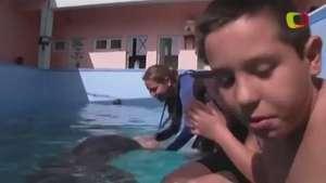 Terapia con delfines mejora salud de niños con Síndrome de Down Video: