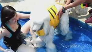 Lujo de perro: Singapur tiene un exclusivo hotel para tu mascota Video: