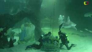 La Navidad con tiburones en el zoológico de Madrid Video: