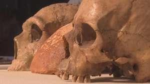 Descubren cráneo de homo sapiens de 55 mil años Video: