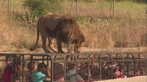 Zoológico en Chile alberga animales rescatados del circo Video: