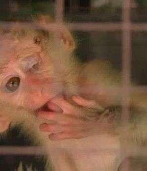 Camboya: lucha contra el tráfico de animales Video: