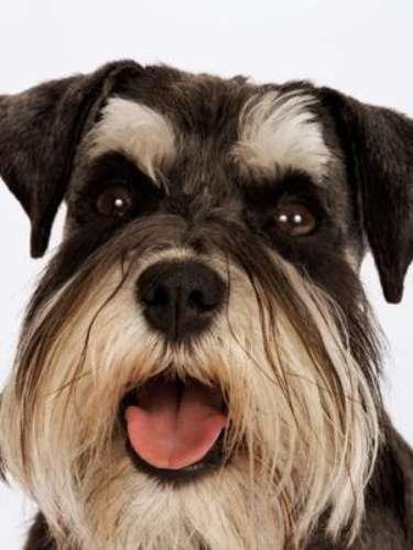 3. En Nueva Zelanda enseñan a conducir a los perros callejeros. Una organización de defensa de los animales en Nueva Zelanda les está enseñando a conducir a algunos perros rescatados de las calles. Se trata de una iniciativa de la Sociedad para la Prevención de la Crueldad hacia los Animales, que quiere poner de relieve la inteligencia de estos animales abandonados y así conseguir que más gente los adopte. Tras cinco semanas de entrenamiento, los perros logran ponerse al frente del volante y están listos para conducir, bajo la mirada de un supervisor, claro.