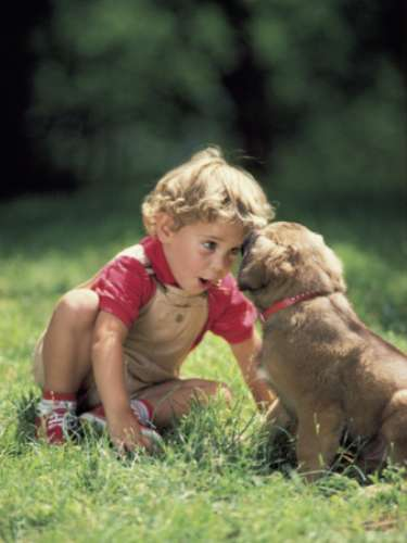 PREESCOLARES: No jugar riesgosamente con los animales, ponerle los dedos en la boca o provocarlos.