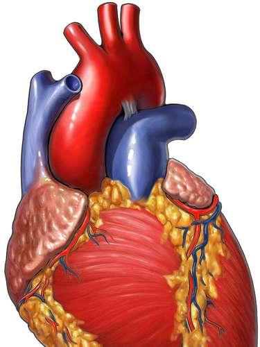 Puede facilitar un ataque cardiaco. La ansiedad y el estrés están vinculados con un aumento del riesgo de sufrir un ataque del 27 por ciento. \