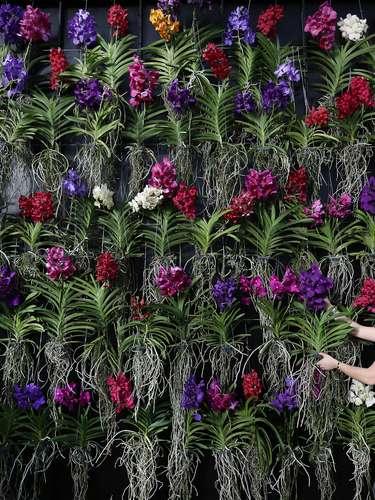 Festival y concurso de orquídeas en el Real Jardín Botánico de Londres.