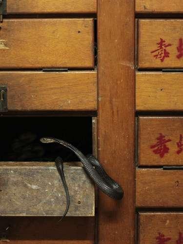 Dos serpientes en su cajón en dónde pone una etiqueta de \