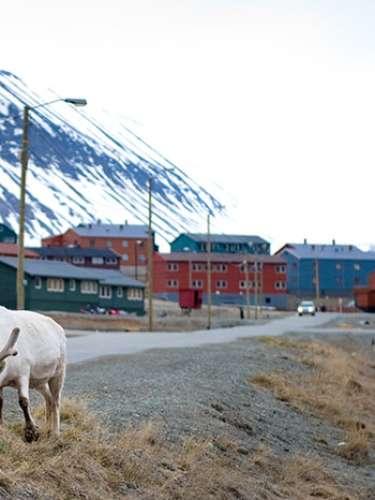 La ciudad fue fundada a principios del siglo XX por John Munroe Longyear, propietario de la Compañía Ártica de Carbón de Boston, asentada en dicho lugar. Desapareció durante la Segunda Guerra Mundial y al término del conflicto fue reconstruida. Es la ciudad de más de mil habitantes más septentrional del mundo y es la sede de la UNIS, un centro de estudios universitarios en donde se desarrollan investigaciones de geología, geofísica y biología.
